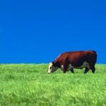 Maybe we need a unit study on farm animals?